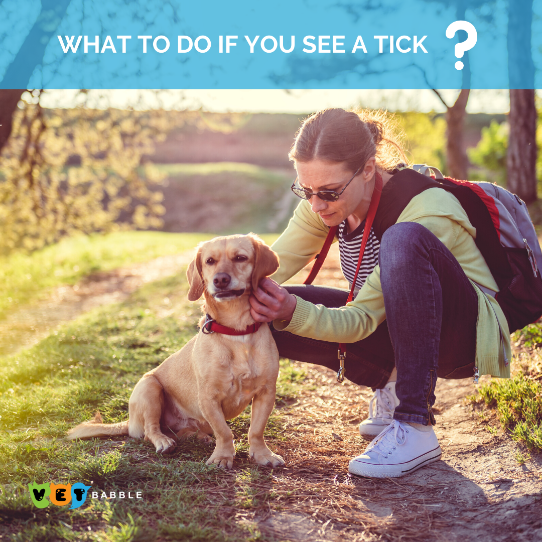 What To Do If You See A Tick On Your Pet
