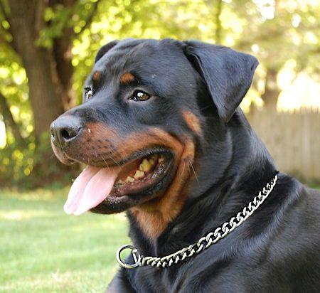 Rottweiler Training Choke Dog Collar Chain Collar Dog Collar