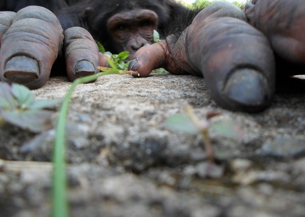 Monkey Hands - NatGeo Traveler Photo