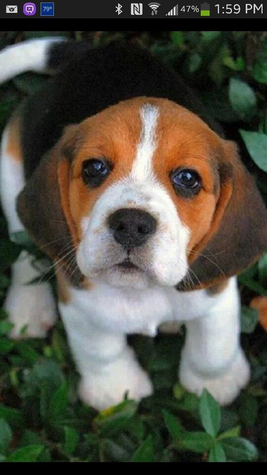 Good Snoopy Beagle Beagle Adorable Dog - 7e40cfa6c9c60fcd2b0f7e4dd26e4360  Pic_26580  .jpg