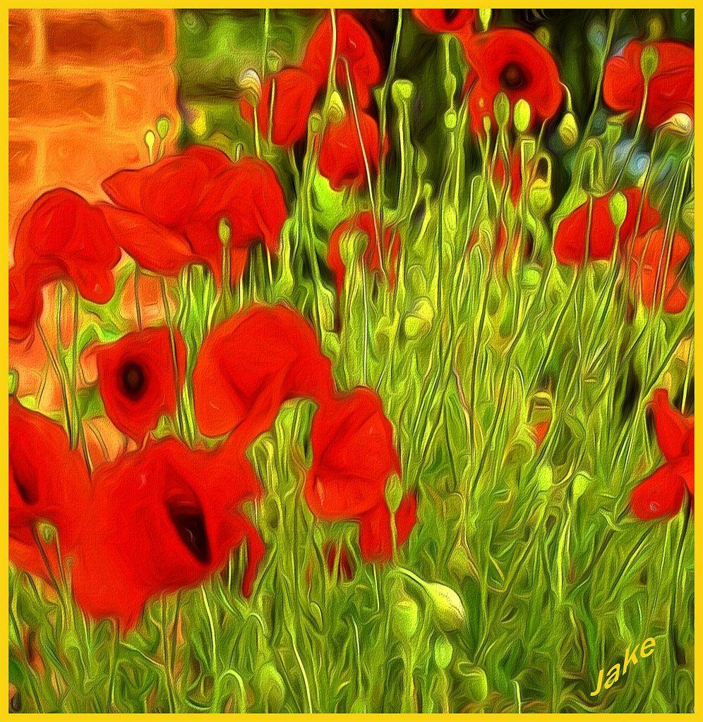 Poppies Impression British wild flowers