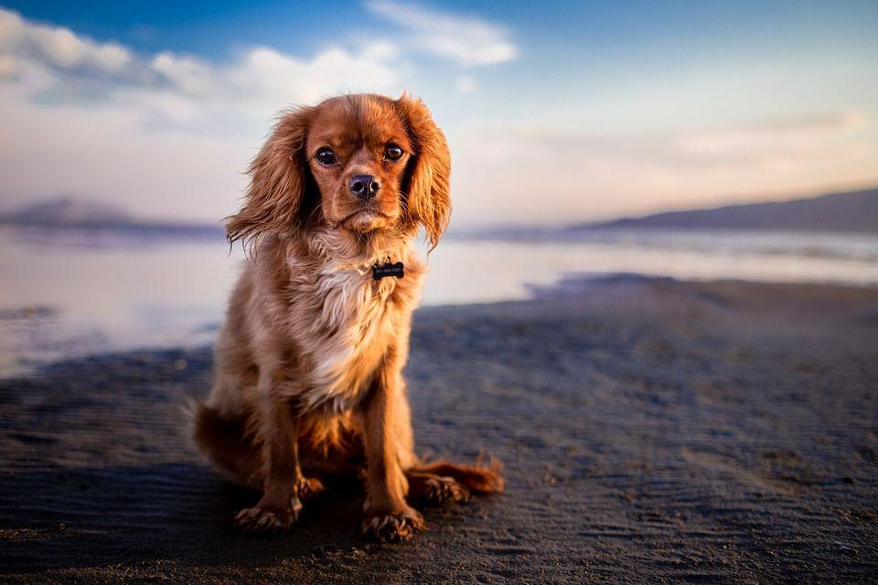 Download Fluffy Canine Adorable Dog - 7e411cf26594c31c2a3607bbec55304e  Trends_486595  .jpg
