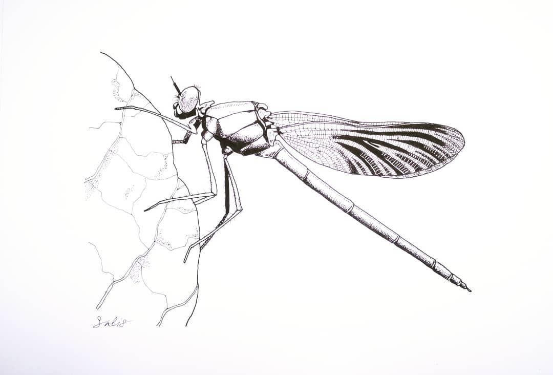 Beaut aile Dm me if you re interested! #libellule #dragonfly #drawing #feutre #dessin #blackandwhite...