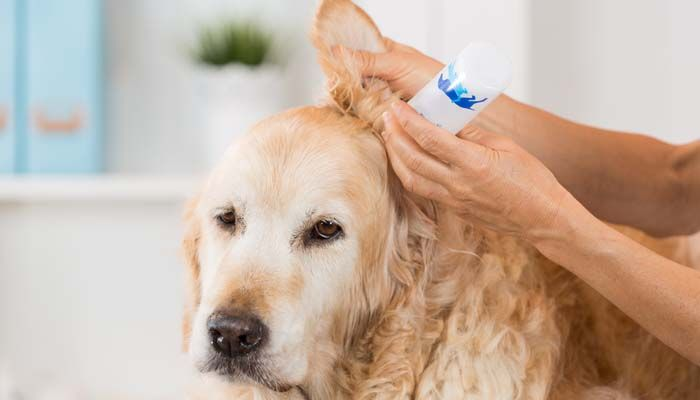 How To Make Homemade Dog Ear Cleaner Dog Ear Cleaner Dogs Ears Infection Dog Ear Wash