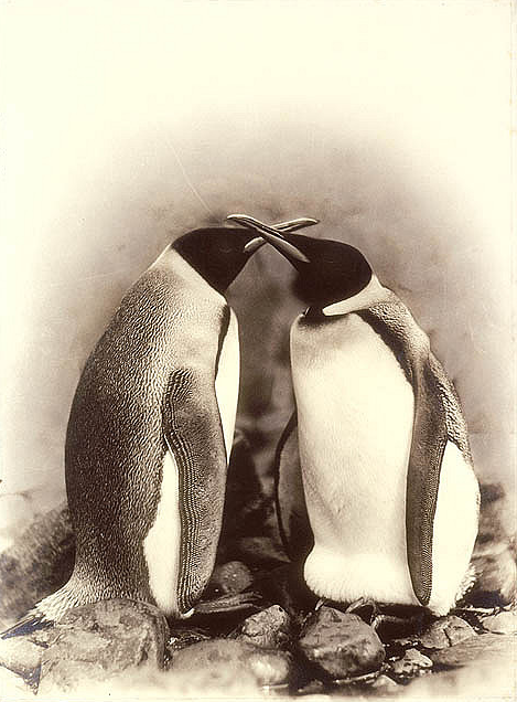 Penguins dating
