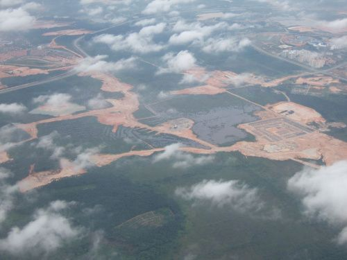 What are the primary causes of global deforestation?