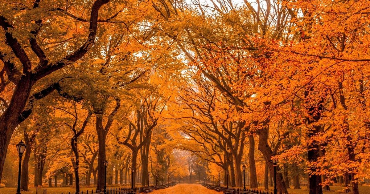 16 Autumn Wallpaper Ipad Pro Autumn In Central Park Hd Wallpaper Download 50 Autumn Wallpaper For Ipad In 2020 Ipad Wallpaper Landscape Wallpaper Ipad Pro Wallpaper