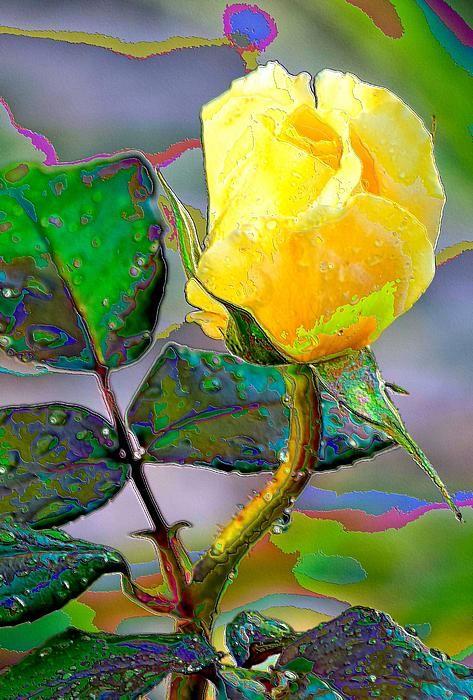 Rose, Yellow Rose, Foil Rose, Print, framed print, canvas print ...