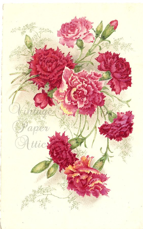 Pink Carnations Vintage French Postcard Chromo Post Card From Vintage Paper Attic Floral Watercolor Pink Carnations Vintage Flowers