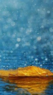 Oяαηgє Leaf In The Rain