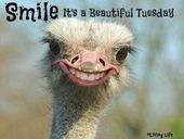 Photo of Smile Its A Beautiful Tuesday  Good morning my beautiful girls. Happy Tuesday :]…