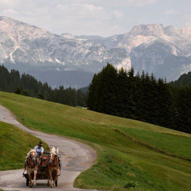 Giro in carrozza #alpedisiusi #ferragosto2015 #relax #adlermountainlodge #vacanze #adlersparesorts #altoadige #estate
