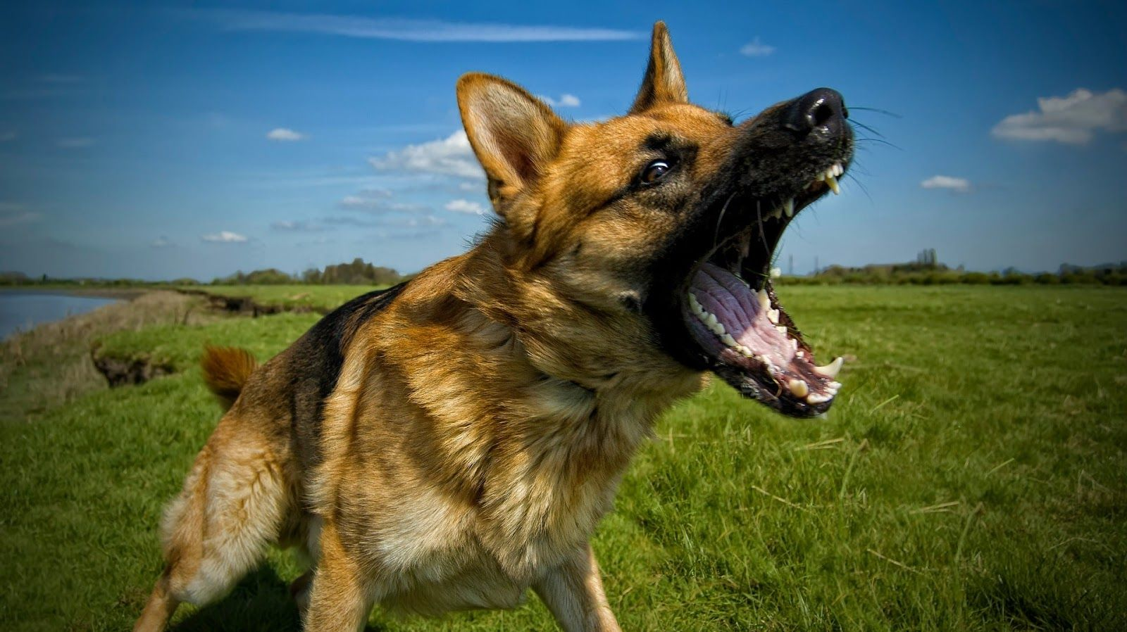Excessive Dog Barking Tips Advice Aggressive Dog Training