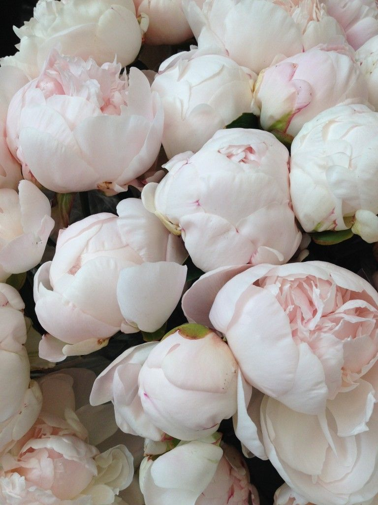 Peony Alternatives For Your Wedding White Peonies Flower