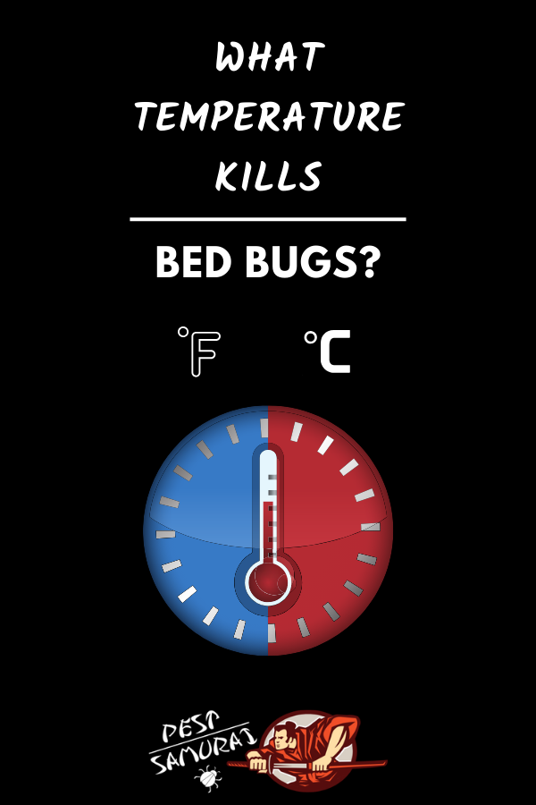 What Temperature Kills Bed Bugs? (With images) Bed bugs