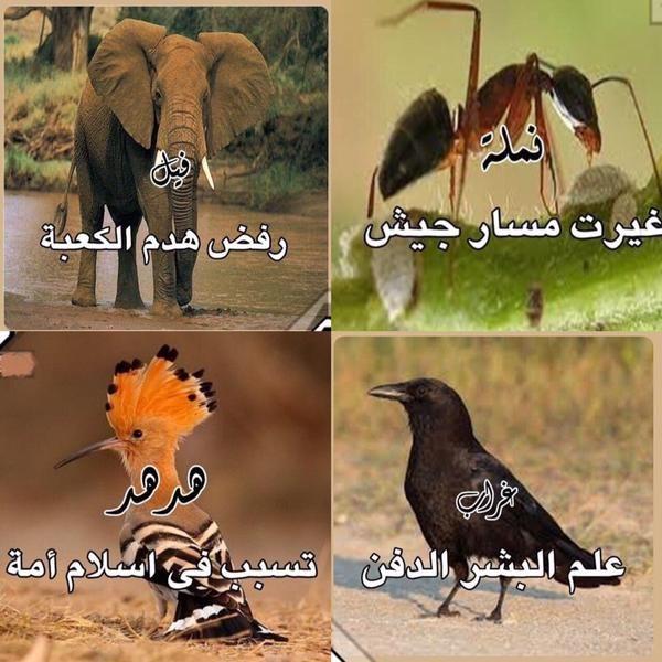 طيورٌ.. تدلُّ البشر.. وتسبح الله .. وتدلهم عليه سبحانه.  فكيف بالإنسان ..!