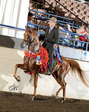Image from http://www.strawberrybanksfarm.com/Baske%20Afire%20Babies/BaskeAlarmNSHFinals.jpg.