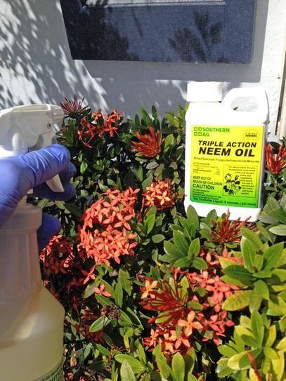 Southern Ag 8 Oz Triple Action Neem Oil 100048933 The Home Depot Healthy Plants Backyard Vegetable Gardens Plants