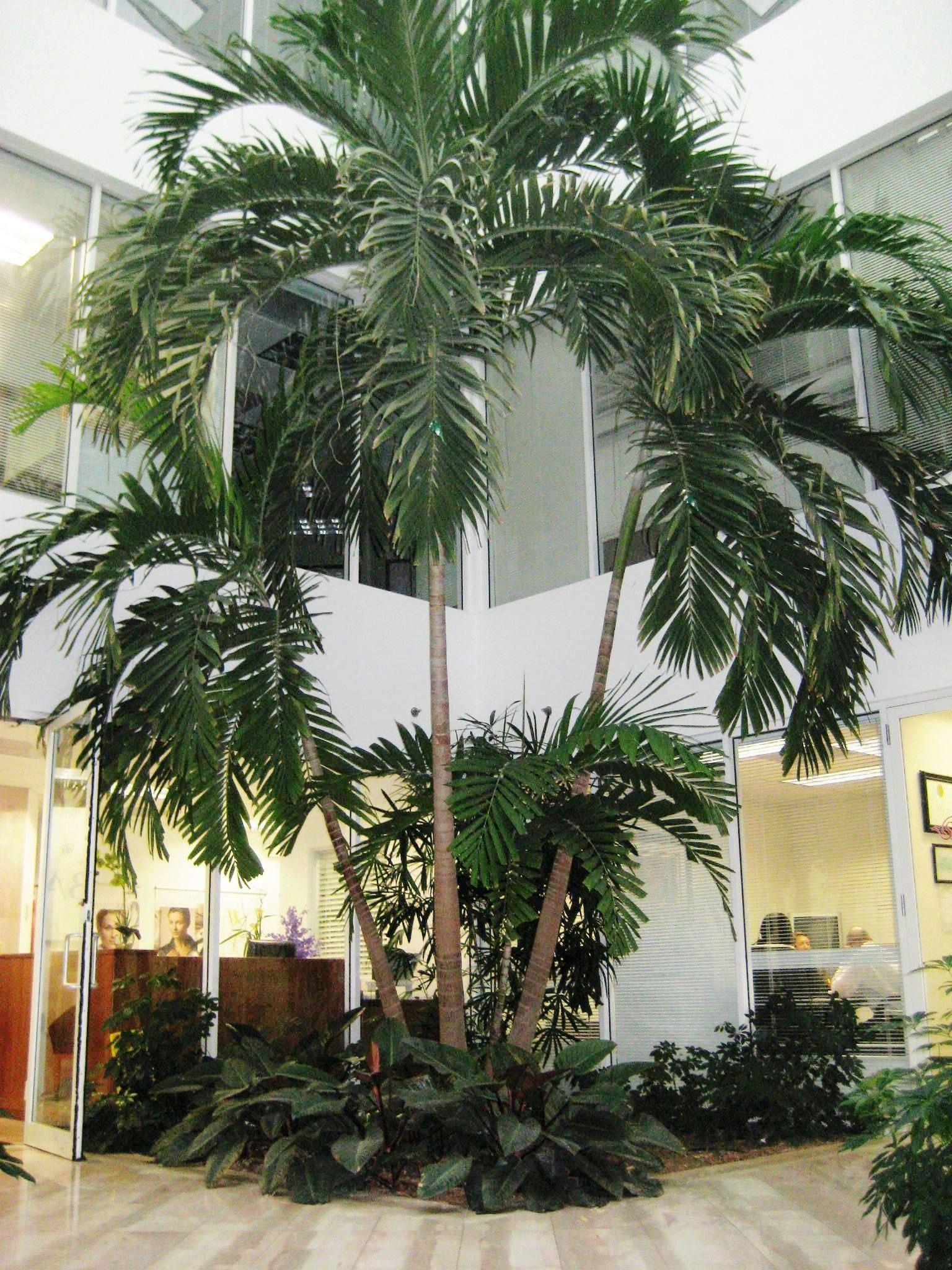 palm beach gardens office. Atrium In West Palm Beach, FL Office Building Beach Gardens