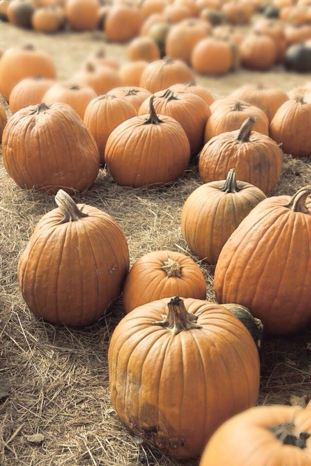 Pumpkin //