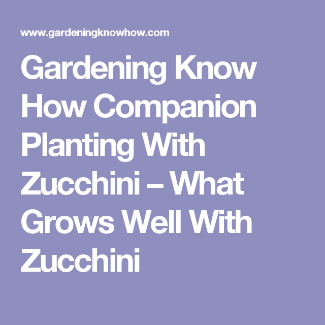 Gardening Know How Companion Planting With Zucchini – What Grows Well With Zucchini
