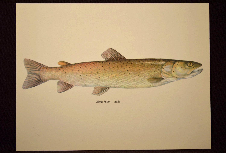 Cabin Wall Art Fish Print Fishing Wall Decor Print | Fish print ...