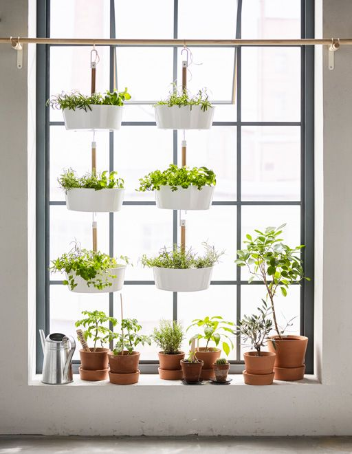 Got Garden Dreams But Only A Small Apartment Try Extending Your Windowsill By Hanging Pots Apartment Plants Herbs Indoors Apartment Garden