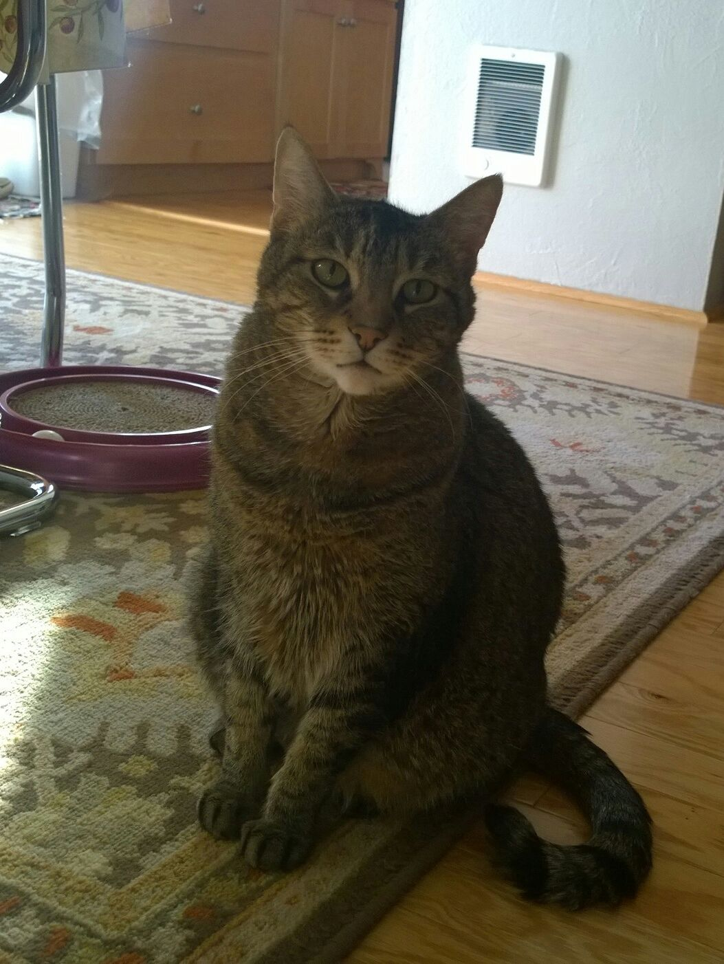 My 10 Yr Old Enrico The Best Baby Boy Has To Be Euthanized Due Lymphoma I Will Keep You Furever In Heart Friend