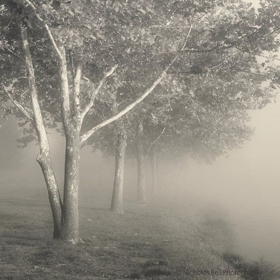 tree photography, landscape photography, trees in fog, fog photography, nature photography, Timeless Trees