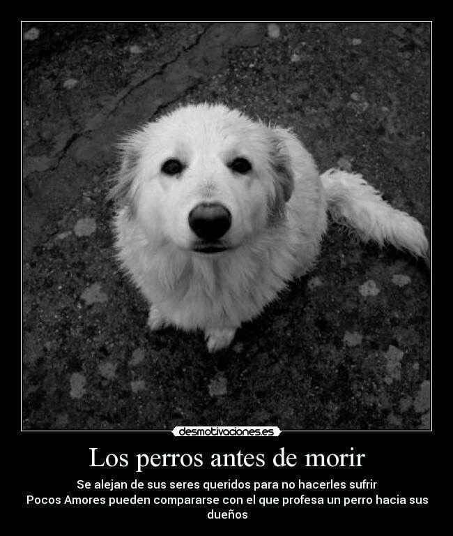 Los perros antes de morir..