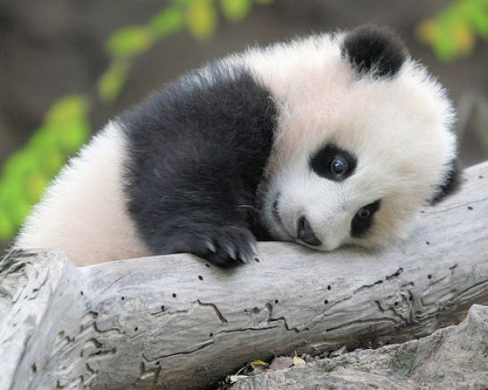 The 20 Cutest Little Creatures On The Planet Be Sure Your Heart Can