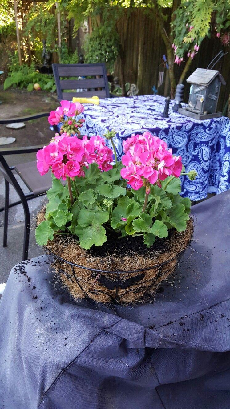 Beautiful flower basket flowers pinterest flower basket beautiful flower basket izmirmasajfo