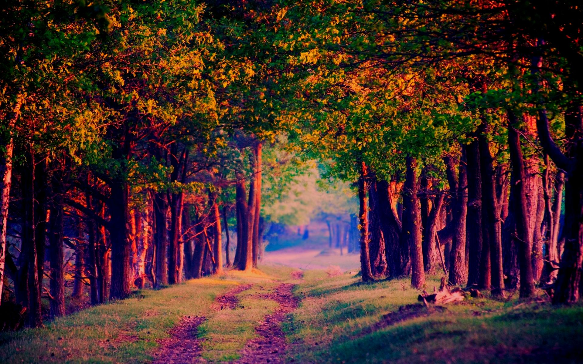 Magical Forest File Name Downloadsnowwhiteinthe