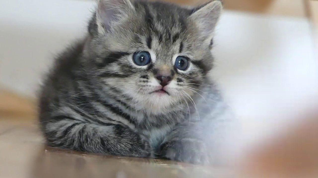 Lustige Katzenbabys | Animals, Cats, Funny