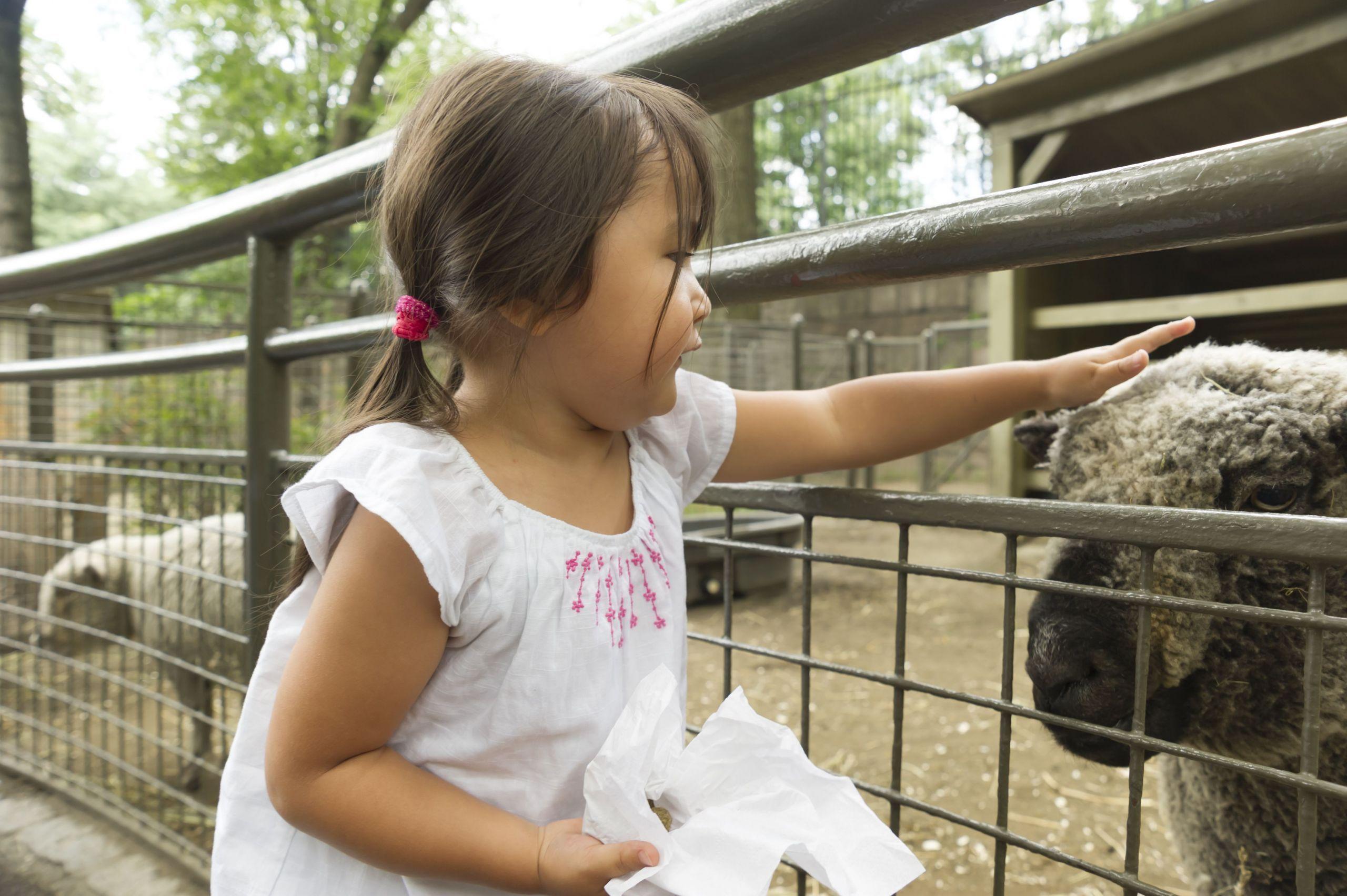 7 Farm Animals Preschool Baby Getty A85f9b583f In