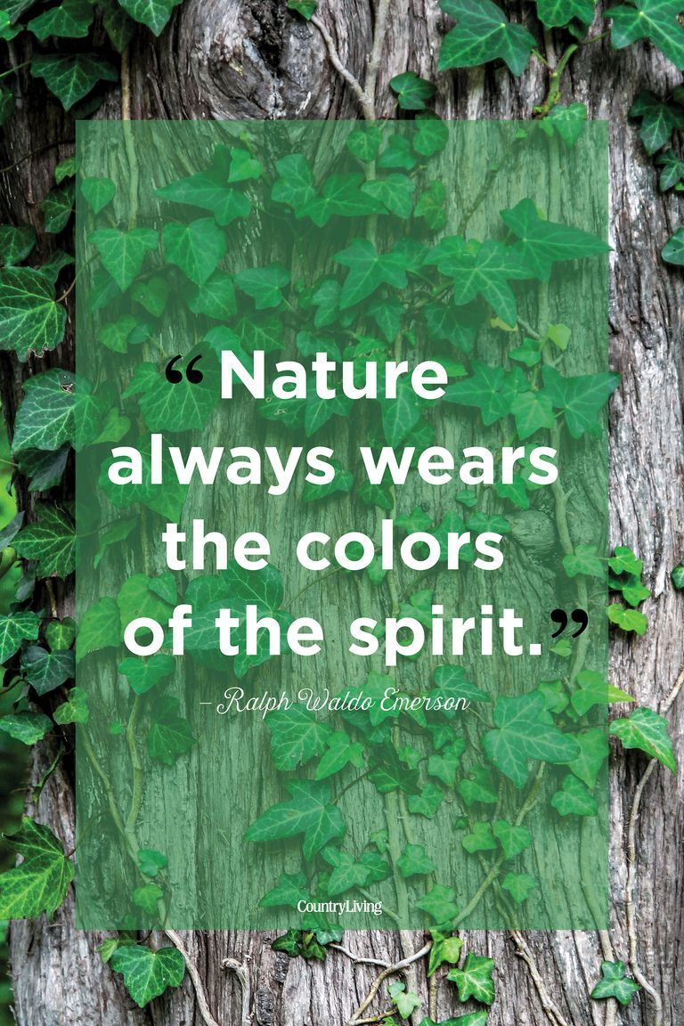 Beautiful Quotes About The Power Of Nature Mother Nature Quotes Nature Quotes Nature Quotes Inspirational