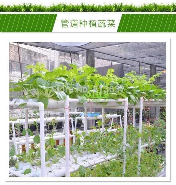 Pin On Hydroponic Gardening