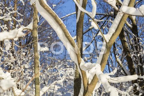 Tree Covered in Snow Stock Photos ,#Covered#Tree#Snow#Photos