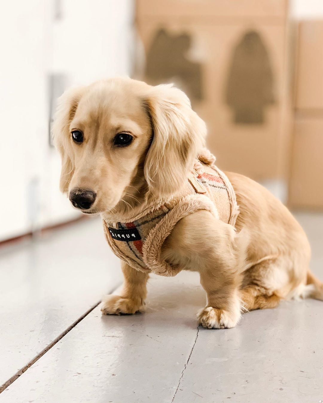 Dachshund Products Apparel And Gifts Animals Baby Dogs