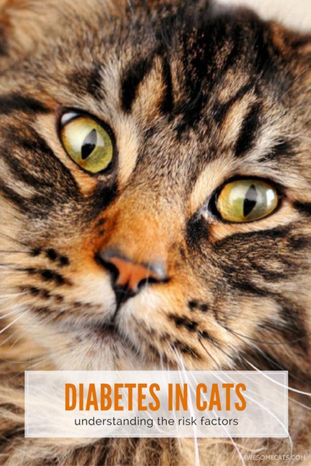 Feline DiabetesUnderstanding The Warning Signs And