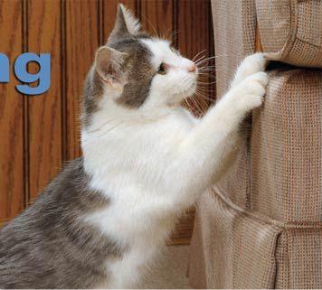 Cat Scratching Sofa Goodca