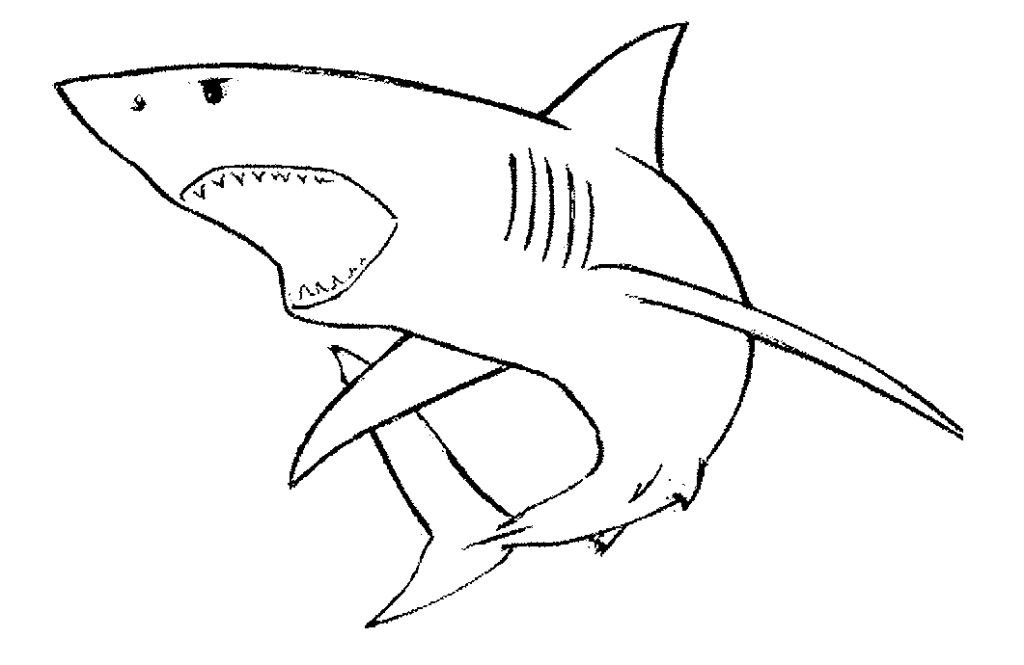 Galerry coloring pages of tiger sharks