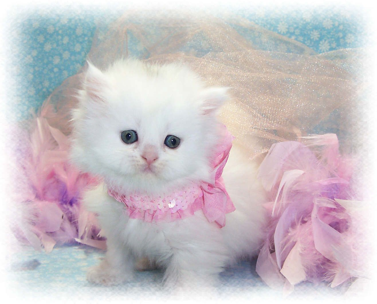Cute Smallest Kitten In The World Cutest Cat Wallpapers Dengan
