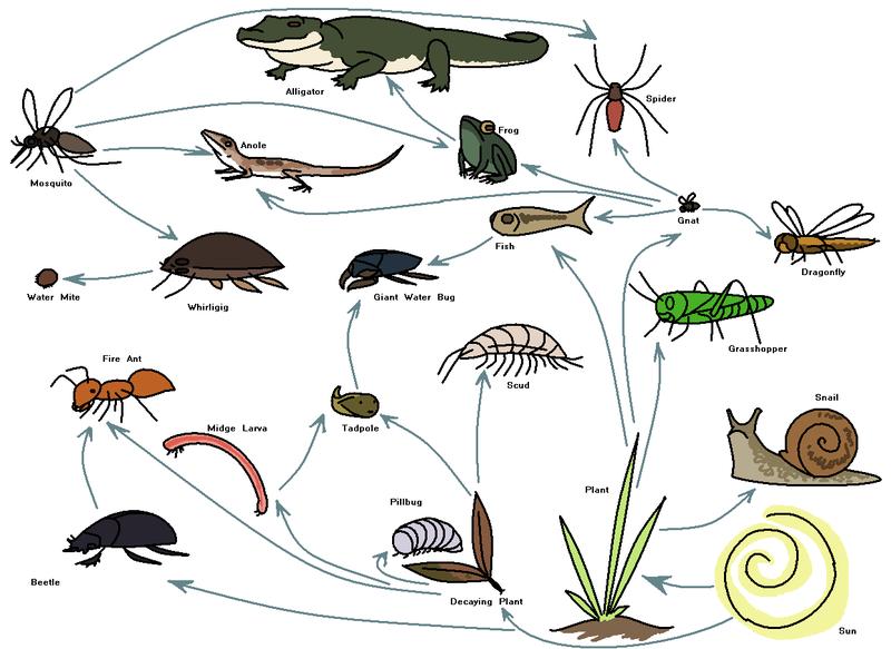 Worksheets Food Web Worksheet rivers google and wildlife conservation on pinterest