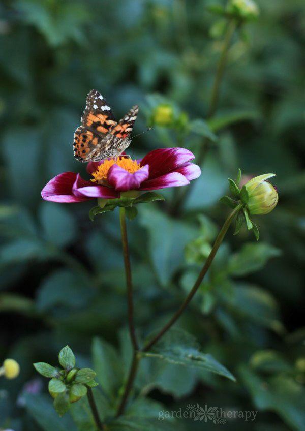 The New York Botanical Garden In The Fifth Season