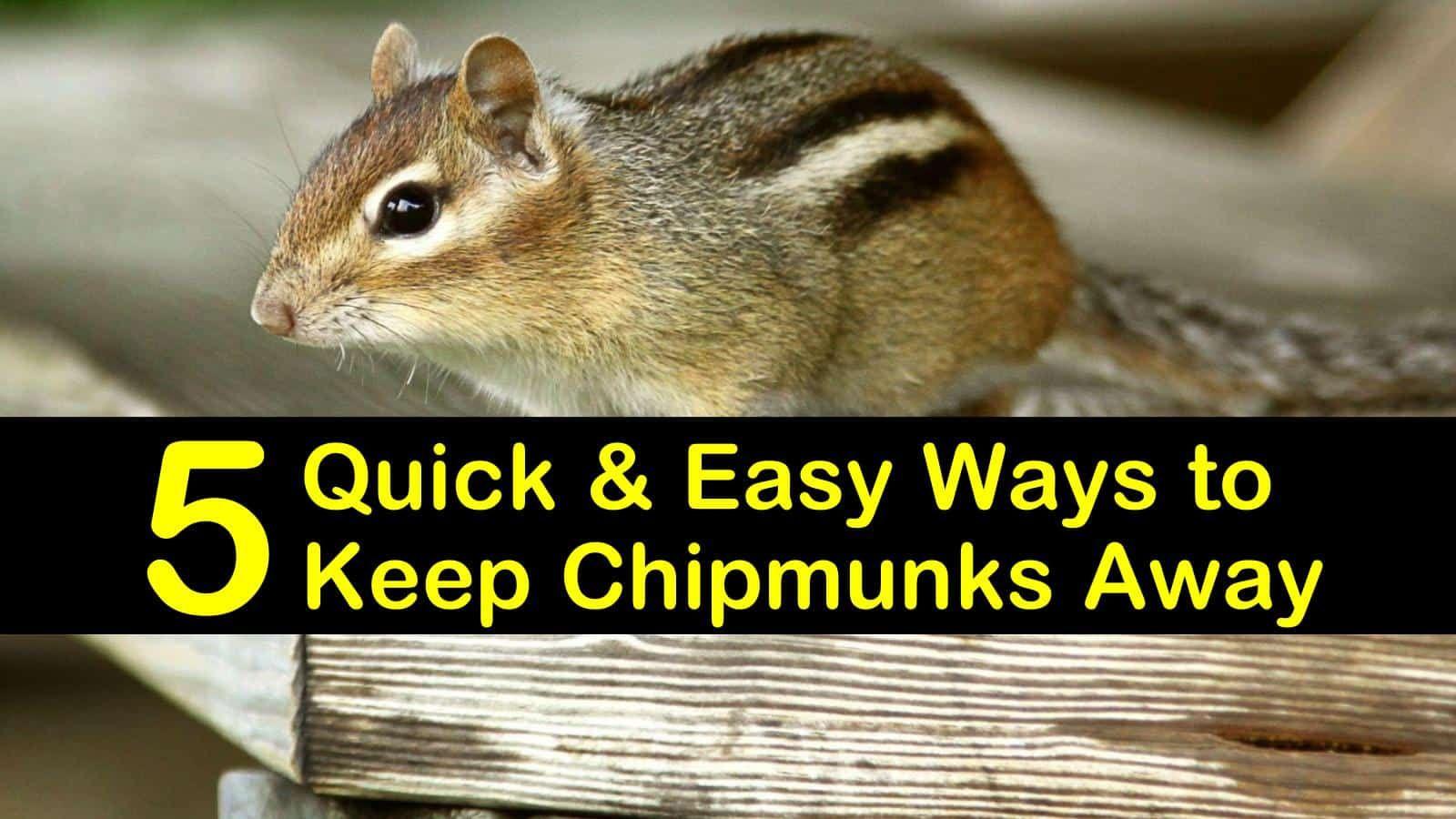 5 Quick Easy Ways To Keep Chipmunks Away In 2020 Chipmunks Chipmunk Repellent Get Rid Of Chipmunks