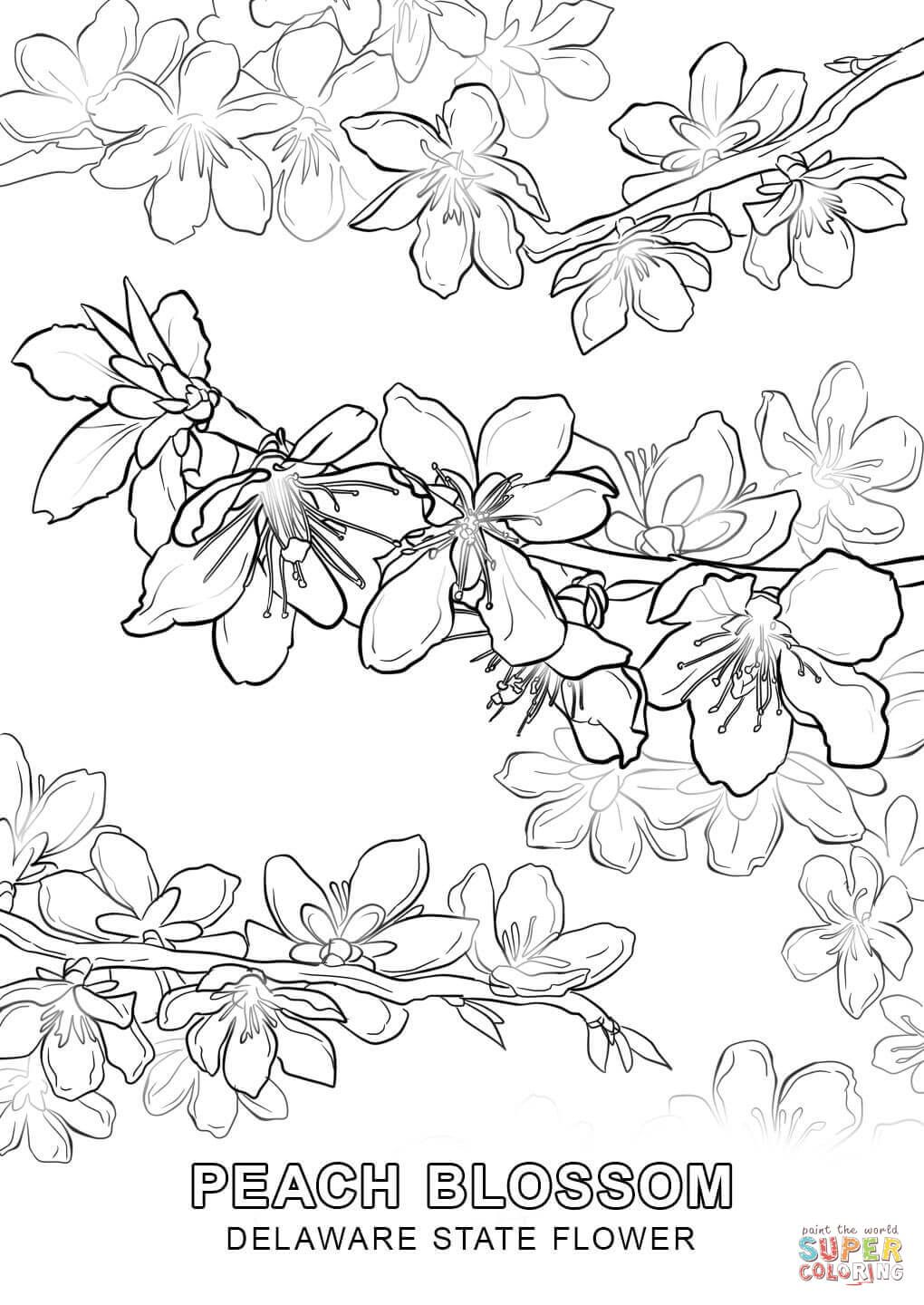 Click The Delaware State Flower Coloring Pages To View Printable