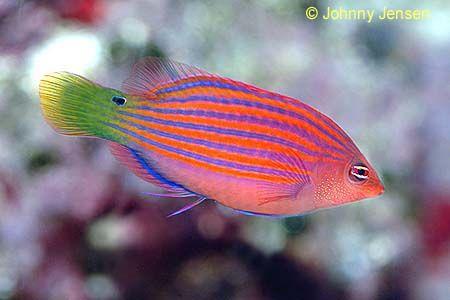 Take A Close Look At His Eye Sea Fish Saltwater Aquarium Fish Tropical Fish