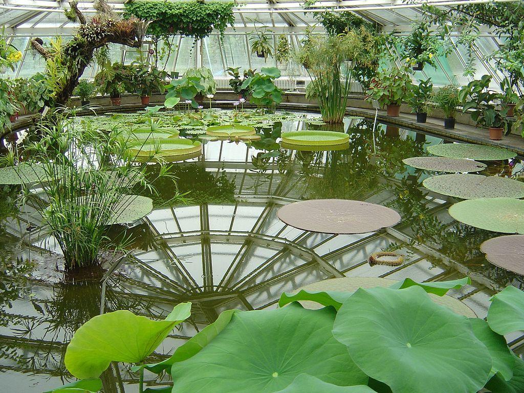 Berlin Dahlem Botanical Garden And Botanical Museum Botanical Gardens Victoria House Most Beautiful Gardens