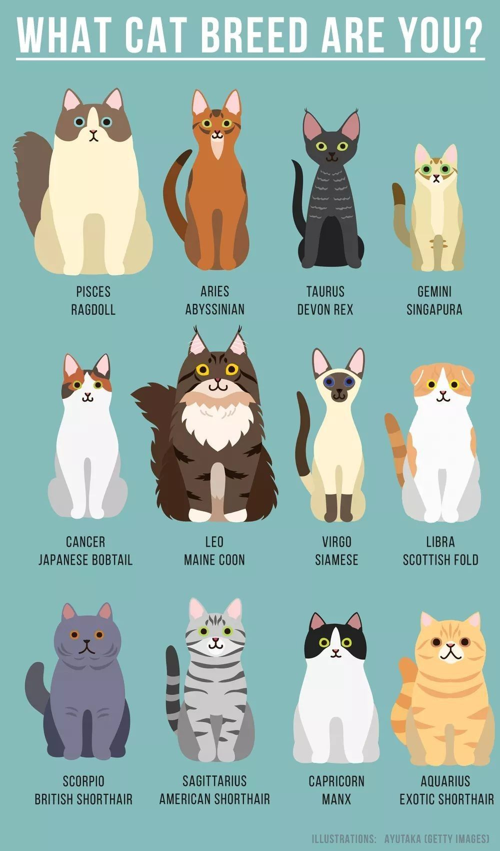 Zodiac Signs Of A Cats Cat Facts Cat Breeds Cat Care